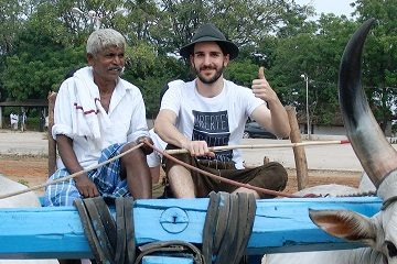 Travel Scientists ox cart race in India