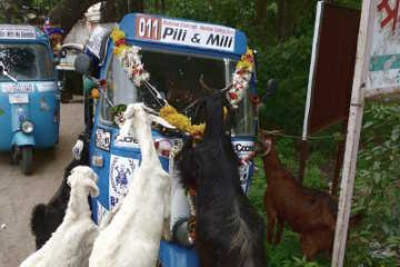 Rickshaw Challenge Mumbai XPress Goa to Chennai crazy adventure tuk tuk race in India goats attack