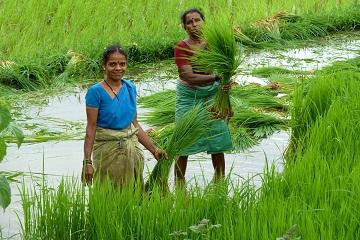Rickshaw Challenge Mumbai XPress Goa to Chennai crazy adventure tuk tuk race in India women planting rice