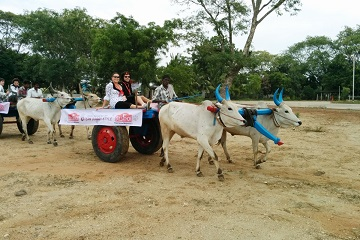 Bullathon, a holiday adventure by Travel Scientists in the real rural India. Explore Tamil Nadu on an ox cart. That's environmentally friendly holiday