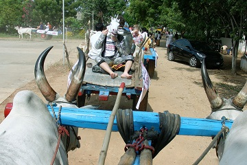Bullathon, a holiday adventure by Travel Scientists in the real rural India. Explore Tamil Nadu on an ox cart. Dress crazy, put a horse head mask on, but dont anger the bulls
