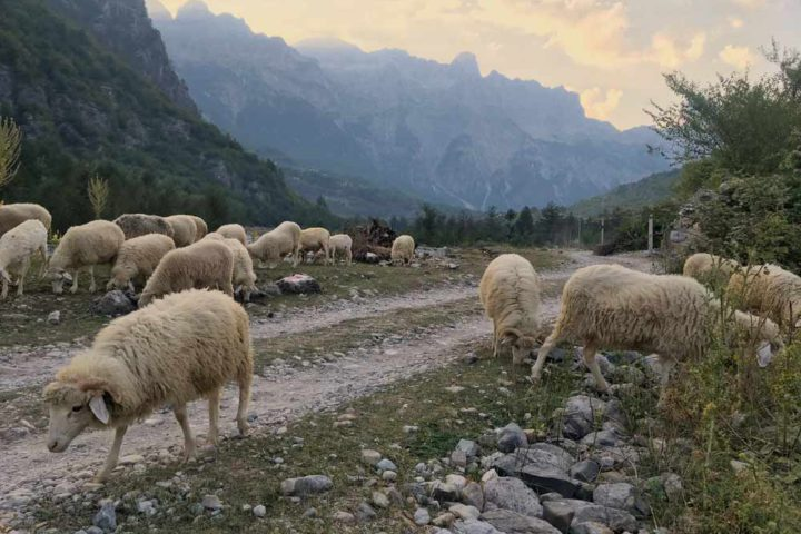 The Travel Scientists' Great Balkan Ride adventure rally takes you around the Balkans. Thethi is the gem of the Albanian alps.